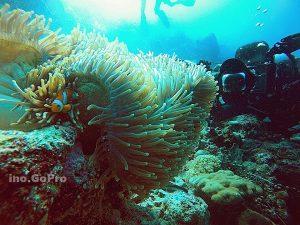 Pesona bawah laut Wakatobi. Foto bya Ahmad Nizar